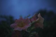 遅い夕方の散歩(5cut) -     ~風に乗って~    Present