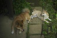 sakura&waku(2cut) -     ~風に乗って~    Present