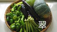 最高の贈り物 大網白里からのめぐみ - 料理研究家ブログ行長万里  日本全国 美味しい話