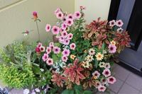 シュートがびゅんびゅん - my small garden~sugar plum~