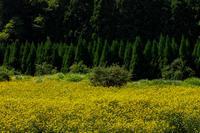ルドベキア咲く花脊 - 花景色-K.W.C. PhotoBlog