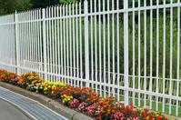 白い鉄柵と百日草と函館銀座通り - 照片画廊
