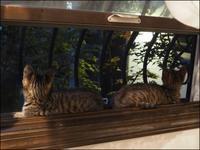 初めての窓辺 - L'Ambiance du Midi