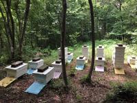 八王子の養蜂場へ引っ越しました! - beehoney*garden           ミツバチ日記