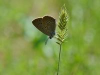 草原の風に翔ぶ蝶を追って(その20) - 不思議の森の迷い人