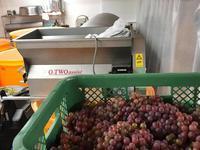 河内エリア全域のデラウェアが揃いました! - WineShop FUJIMARU