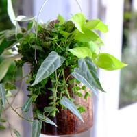 鉢の入荷とグリーンの寄せ植え - mon dimanche blog