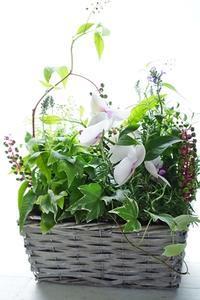 8月は鉢月(^^♪鉢植えコンポジション月間 - お花に囲まれて