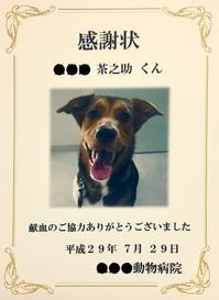 素敵な笑顔☆ - AMO*PETS アーモペッツ