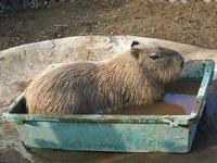 8月23日(水) 身勝手 - ほのぼの動物写真日記