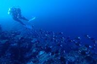 17.8.23ウネリを読んで、ビーチはしご - 沖縄本島 島んちゅガイドの『ダイビング日誌』