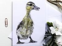 カモのひな みよこ Miyoko Ducklingのカード新入荷! - ブルーベルの森-ブログ-英国のハンドメイド陶器と雑貨の通販