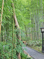 伊豆旅行 - 美味しい贈り物