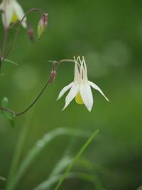 坪庭の花と昆虫 - コーヒー党の野鳥と自然 パート2