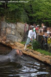 2017年8月 王子動物園 その4 トワイライトzoo - ハープの徒然草