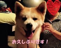 花(旧 春菜)ちゃん近況報告♪ - もももの部屋(家族を待っている保護犬たちと我家の愛犬のブログです)