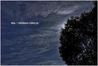 月光風 - ルリビタキの気まぐれPATA*PATA
