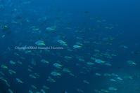 キホシ - Diving Life ~Aita pe'a pe'a~