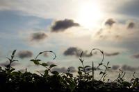 ― 処暑の夕暮れ ― - 風のうた 猫の呟き