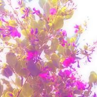精霊目線 - Miemie  Art. ***ココロの景色***
