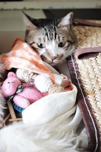 猫のおもちゃを整理しよう - きょうだい猫と仲良し暮らし