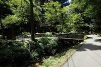 私の百名山 39/100 石見銀山・仙ノ山(島根県大田市)3 - ずんどこどっこいしょ