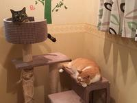 サービスショット特集 - 「両手のない猫」チビタと愉快な仲間たち