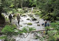 大好きな森の中の綺麗な溪へ・・・・ - アンパラなブログ   フライ、トラウトルアー編