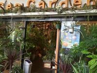 八王子南大沢:観葉植物「SeaGarden」で、ブルーシールアイスが食べられる! - CHOKOBALLCAFE