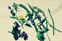 """ハーブとアロマセラピー最初の一歩 ロンドン市内で講座を開きます♬ - 英国メディカルハーバリスト&アロマセラピストのブログ""""Herbal Healing 別館"""""""
