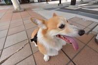 駐車係の人 - むーちゃんパパのブログ 3