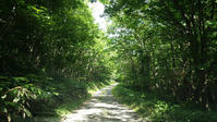 夏の林道あそび - 山猫を探す人Ⅱ