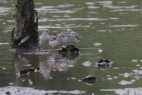 海で見た鳥さん~☆ - takiのカメラ散歩~☆