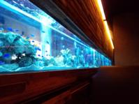 熱帯魚が泳ぐオシャレなダイニング「LIME」٩( 'ω' )و - 帰ってきたお魚まにあ