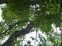 明日から新学期 - hibariの巣