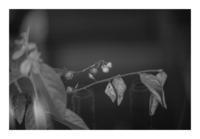 Leaf#20 - VELFIO