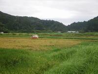 稲刈り本番 / 秋のはしり - 千葉県いすみ環境と文化のさとセンター
