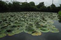 鬼の棲む池 - TOM'S Photo