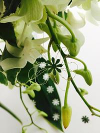グリーンメリアのブーケ - **おやつのお花*   きれい 可愛い いとおしいをデザインしましょう♪
