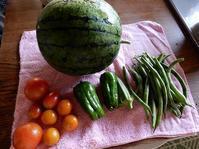人生初収穫のスイカと枝豆。 遅まきの夏が来た! - あいやばばライフ