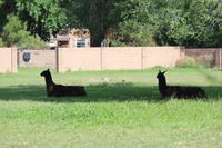 Los Ranchos de Albuquerque - 南加フォト