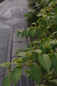 秋の気配 - pottering