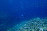 17.8.28迫力!ドロップへ。 - 沖縄本島 島んちゅガイドの『ダイビング日誌』