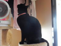 みんなのお見送り - 愛犬家の猫日記