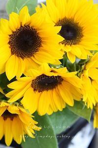 先週の定期装花からひまわり - Impression Days