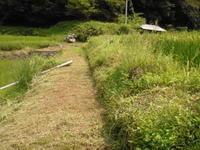 この大変な草刈り - ひろしの「どっこい田んぼのジャージーデー」