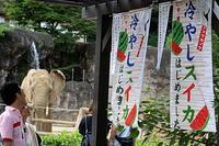 サマーナイト@Tama Zoo 2017のアフリカゾウ - 動物園放浪記