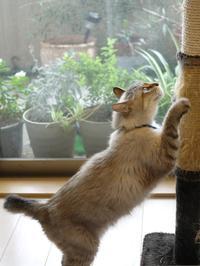猫のお留守番 ちびくん編。 - ゆきねこ猫家族
