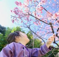 星野リゾート界伊東〜桜がきれいでした〜 - 旅するツバメ                                                                   --  子連れで海外旅行を楽しむブログ--