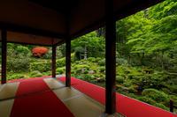春の花咲く三千院 - 花景色-K.W.C. PhotoBlog